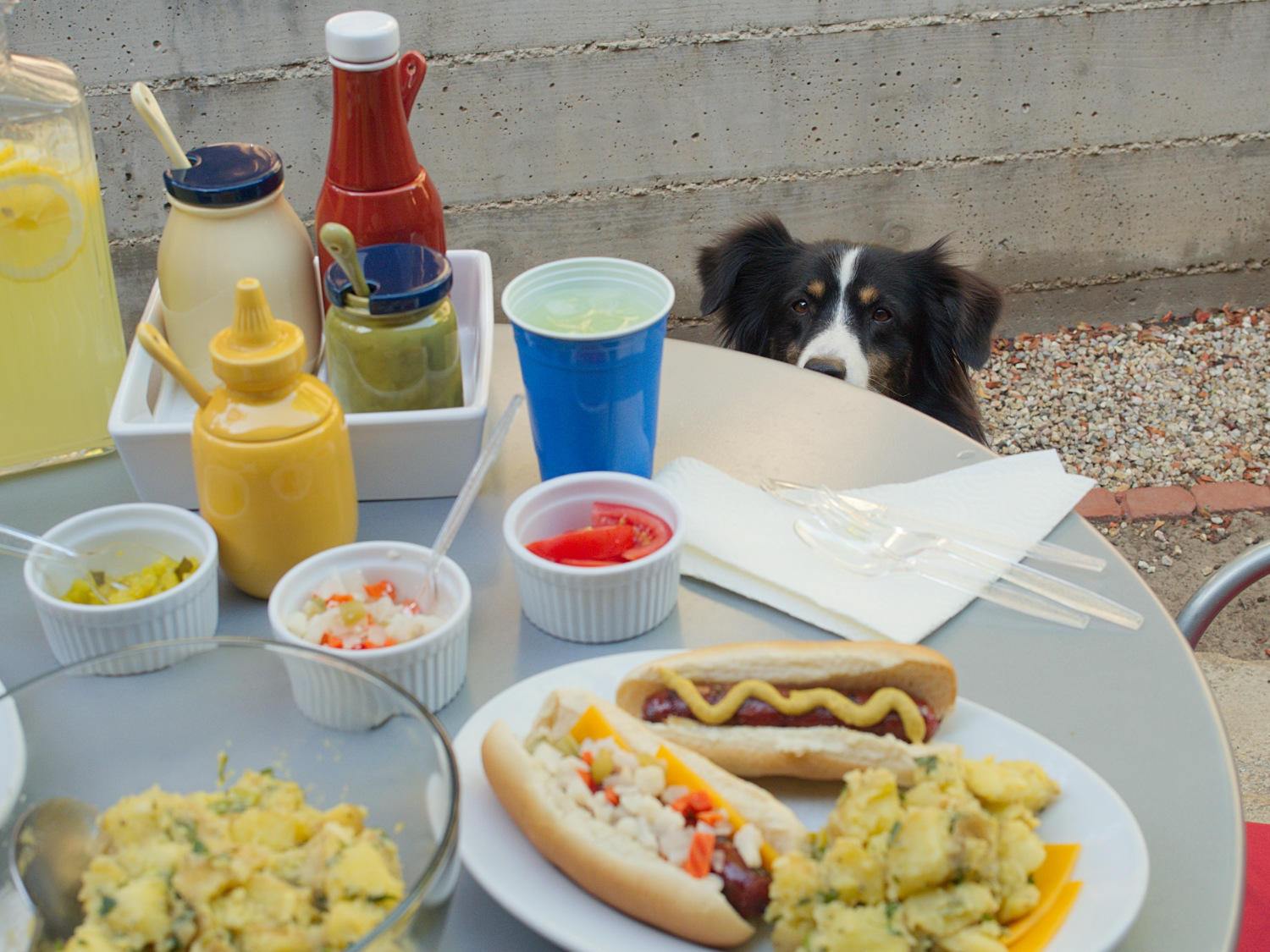As always, Riley keeps a watchful eye on things... especially those hot dogs.