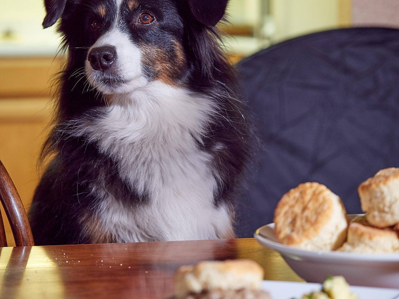 Can I pleeeeeaaaassssssseeeee have a biscuit????????