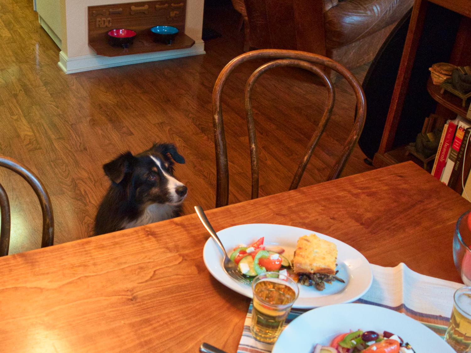 Riley literally sits right by your chair, hoping you'll pick him up and let him eat off the table.