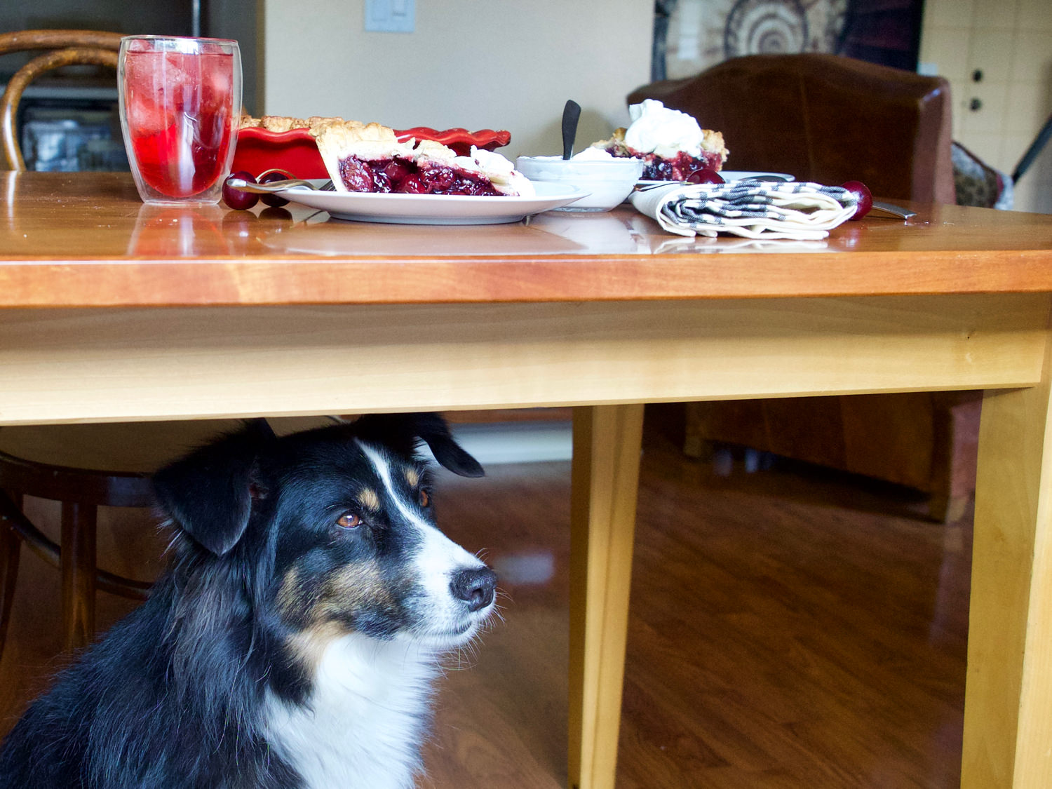 Riley waited under the table today for something to come his way...