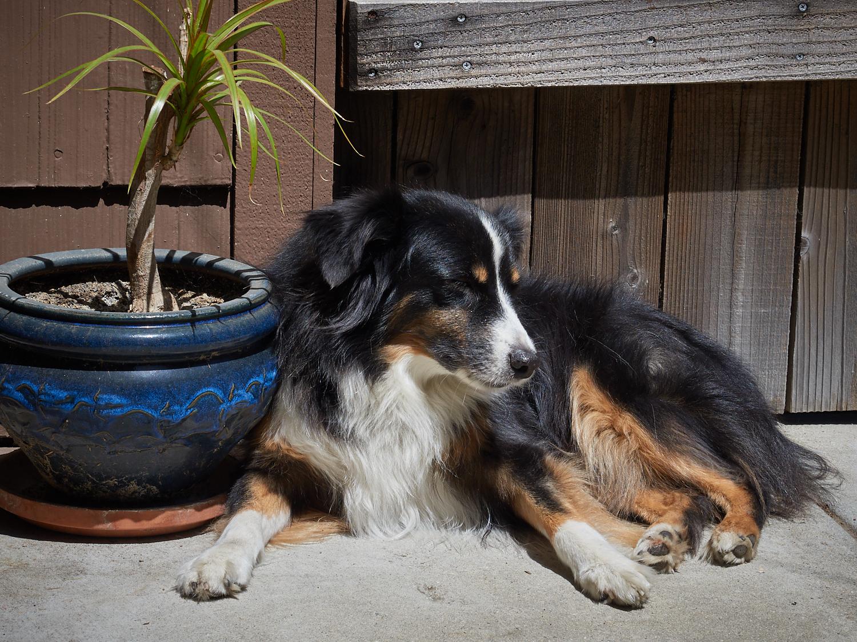 Riley enjoying his favorite sunny spot.