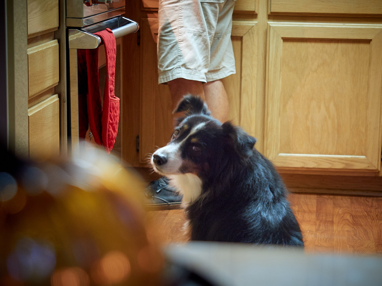 Riley patiently waiting for food…