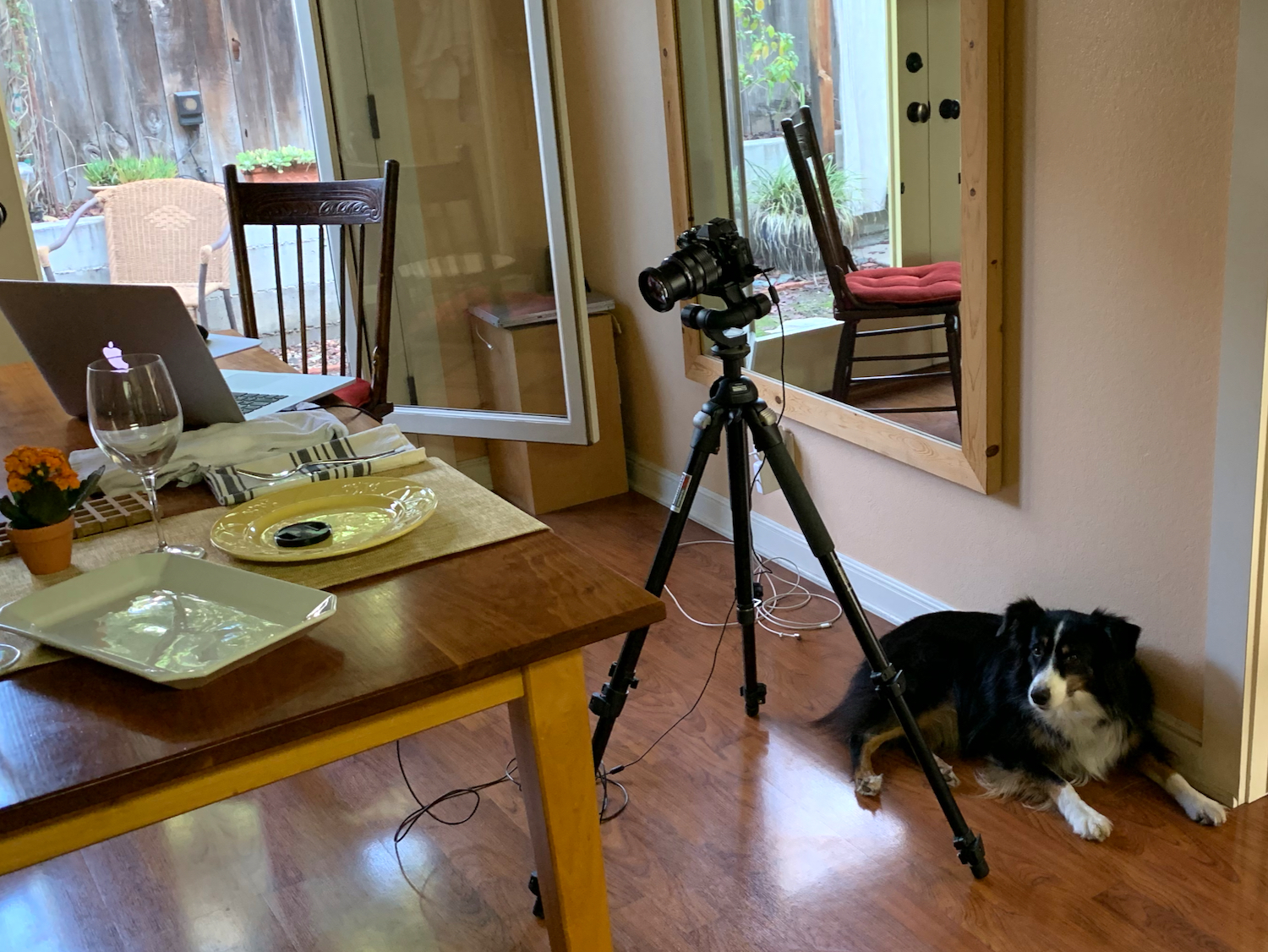 Riley waits right by the camera, as that is usually closest to the food.