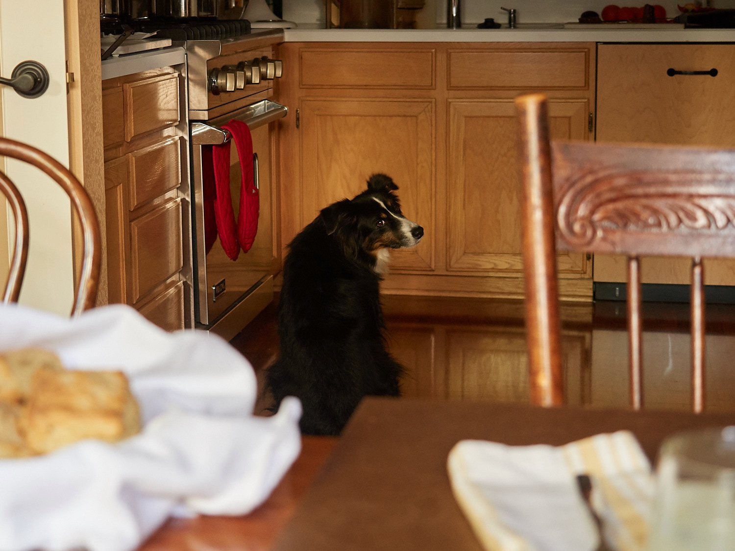 Riley knows there is meatloaf on the counter… and he's waiting.