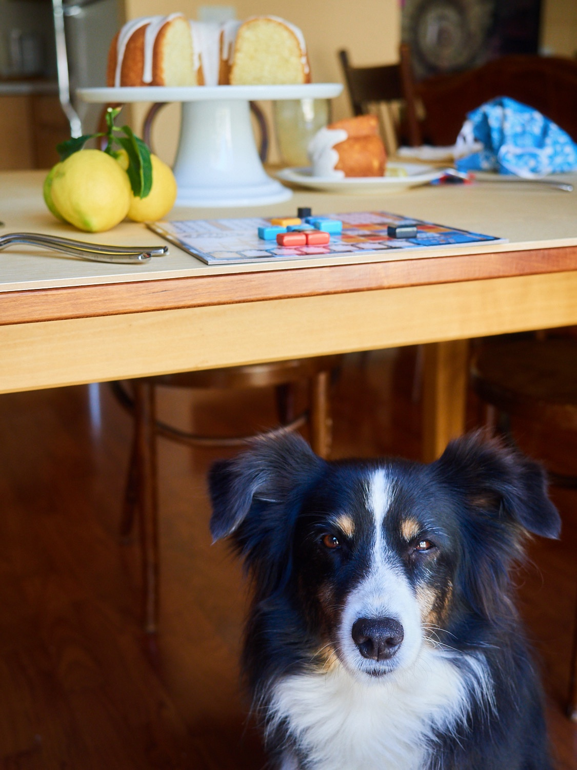 Riley, always between the camera and the food…