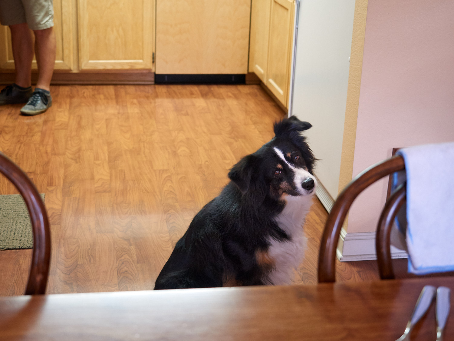 Riley waited by the table to be sure he could see the Fritatta when it arrived.