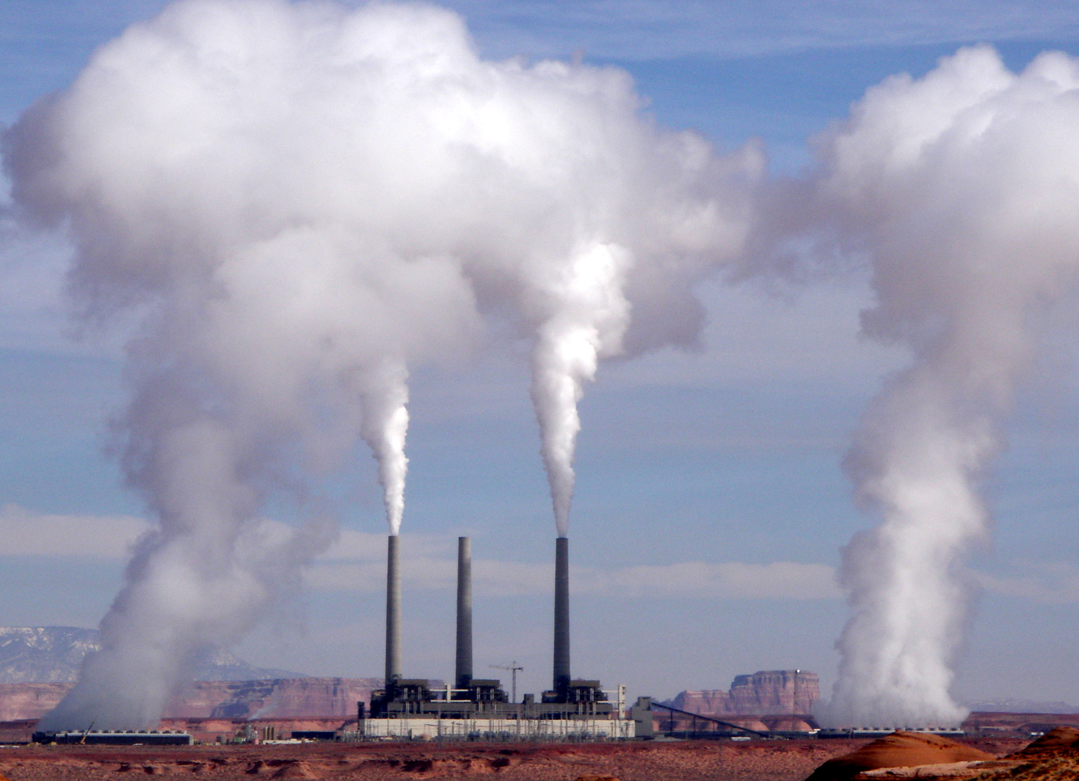 Navajo plant-ed.jpg