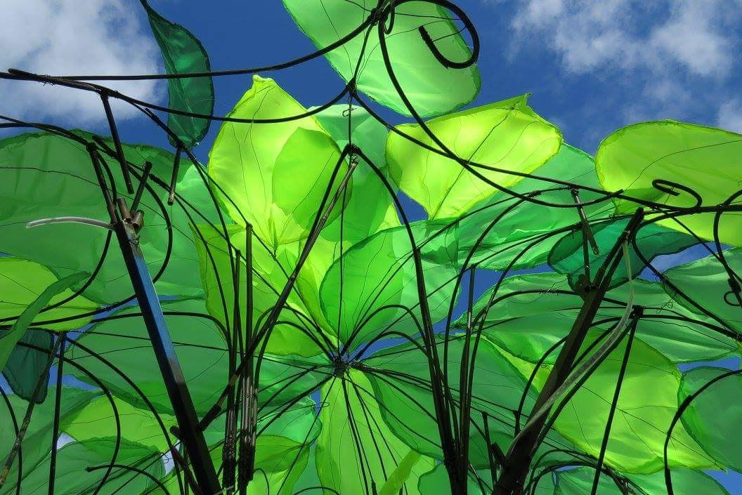 Green leaf umbrella.jpg