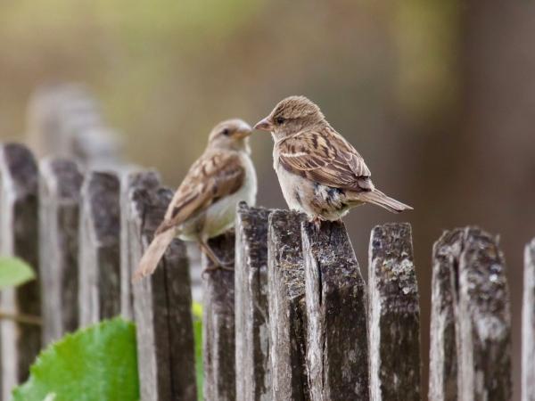 Photo by Shutterstock.com