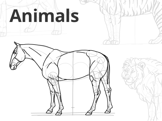 animal-proportions.png