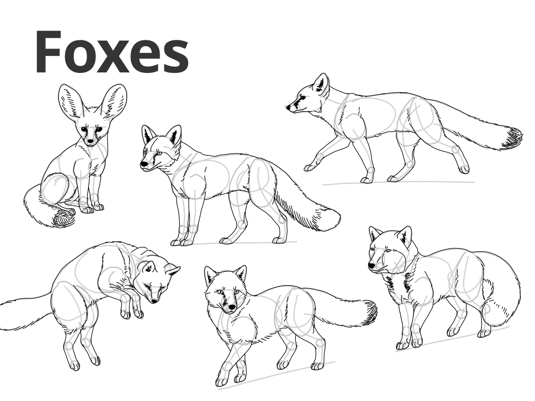 foxes.png