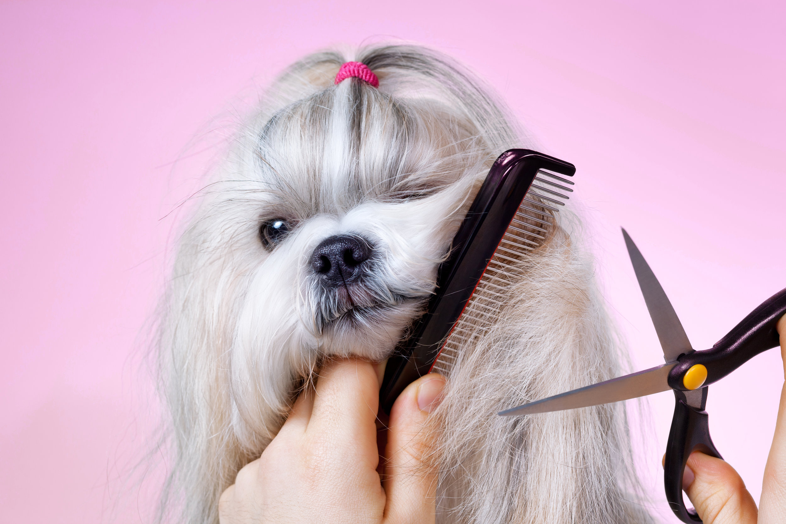 "looking a little ruff? - Rest assured, our professional groomers will get your pooch ""Dog Show"" ready in a bark."