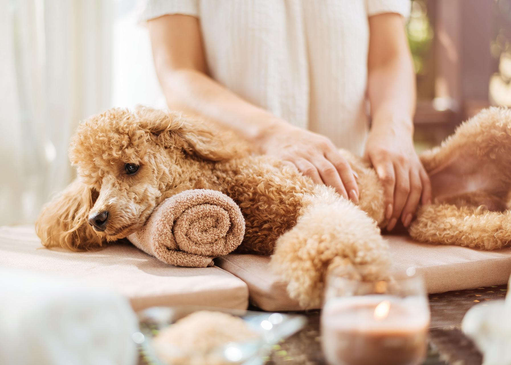 Doggy Facial Massage - à la carte