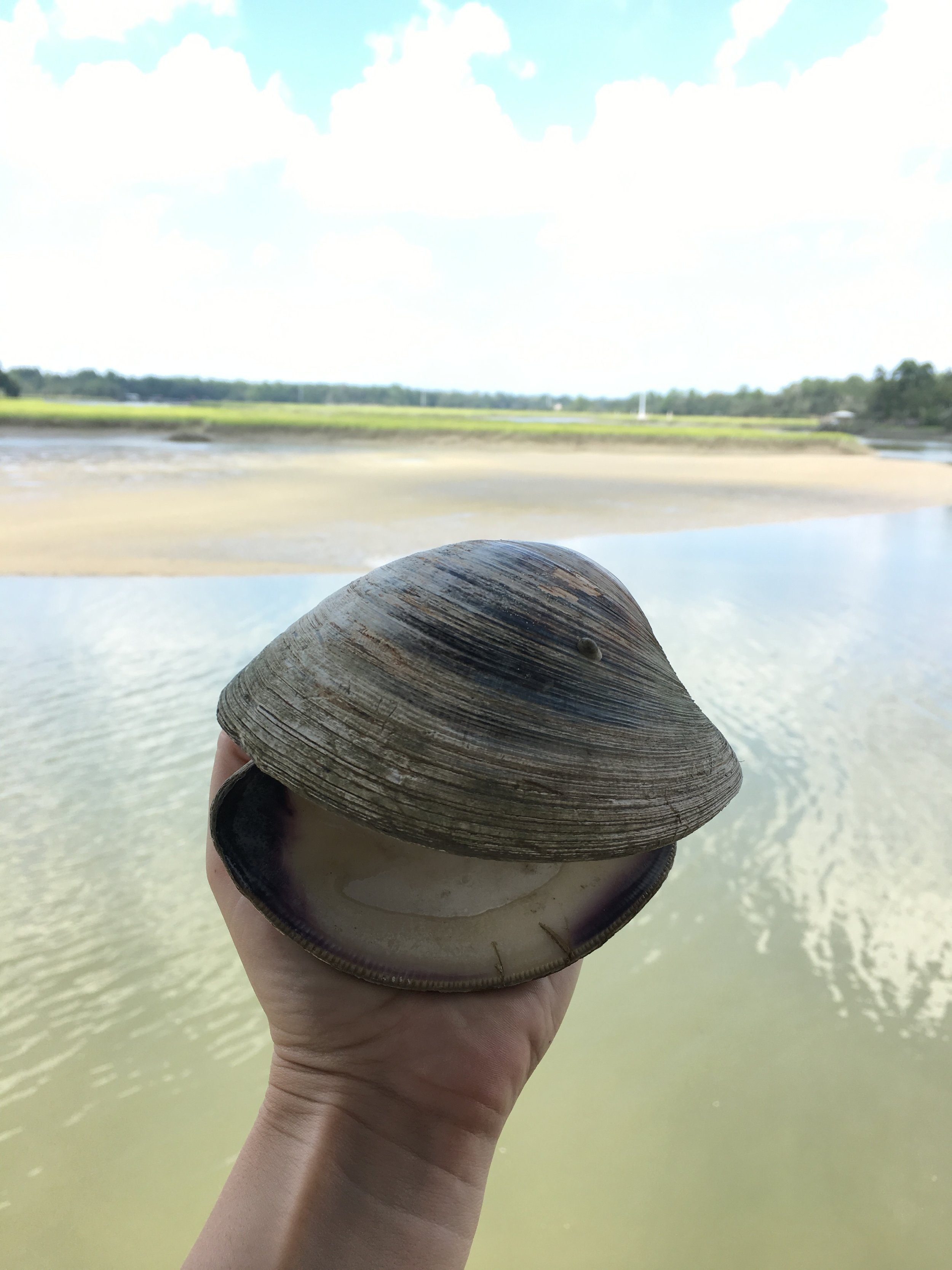 the biggest of the bunch and the sandbar in the background. If you squint you can see the Clamily Community