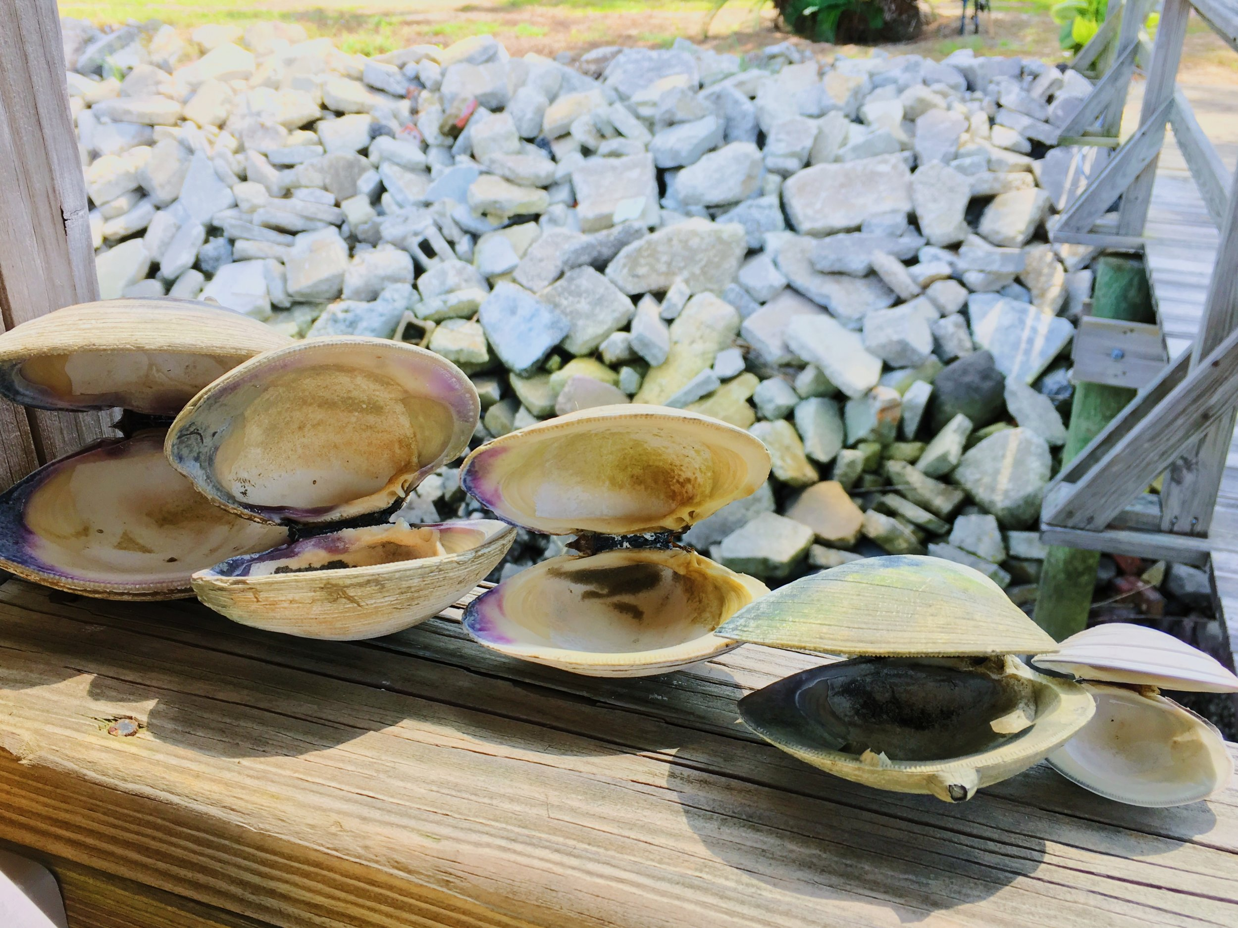 the spoils of exploration. These were the best and brightest of the clam community.