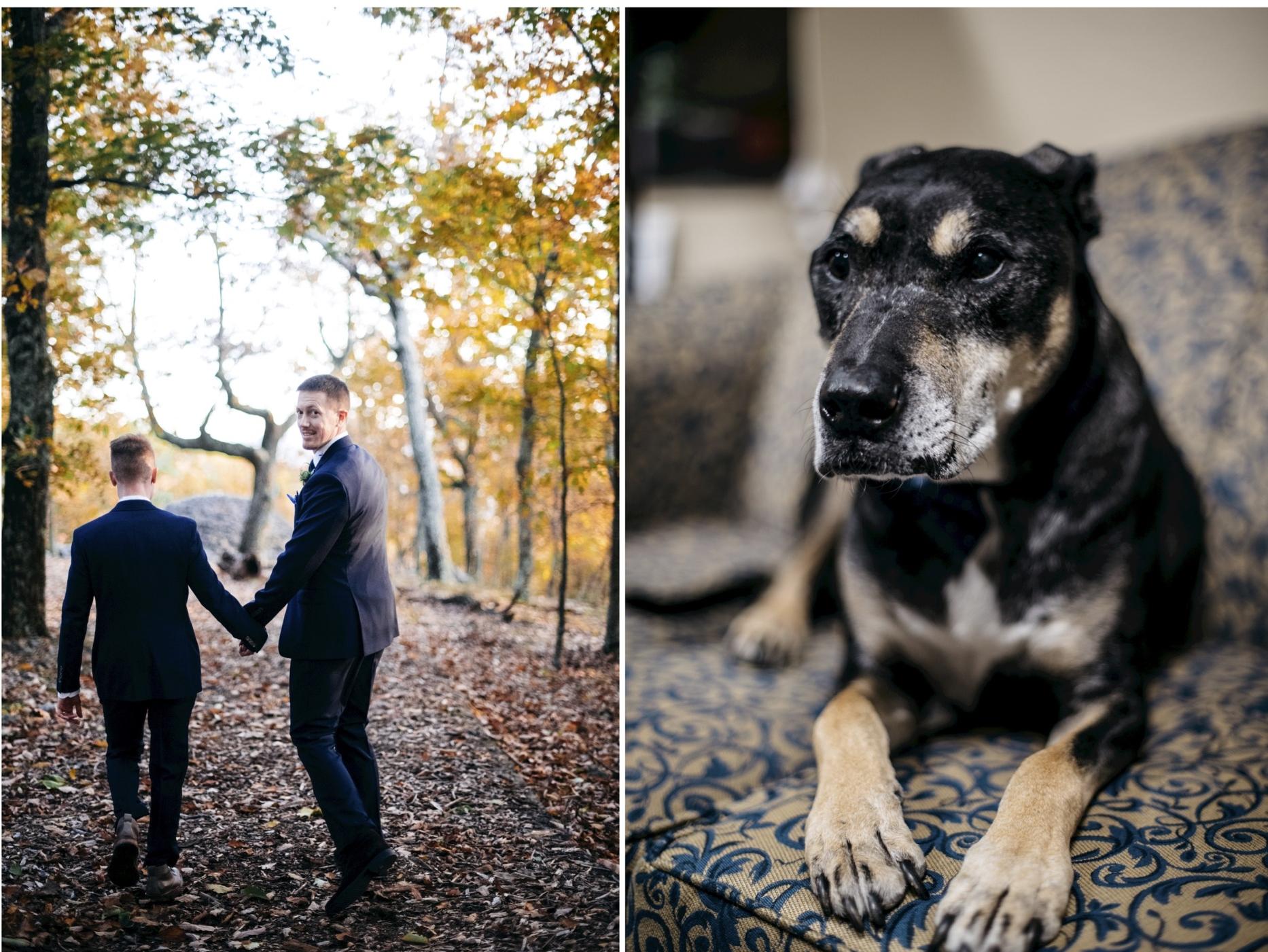 nashville wedding fall dog.jpg