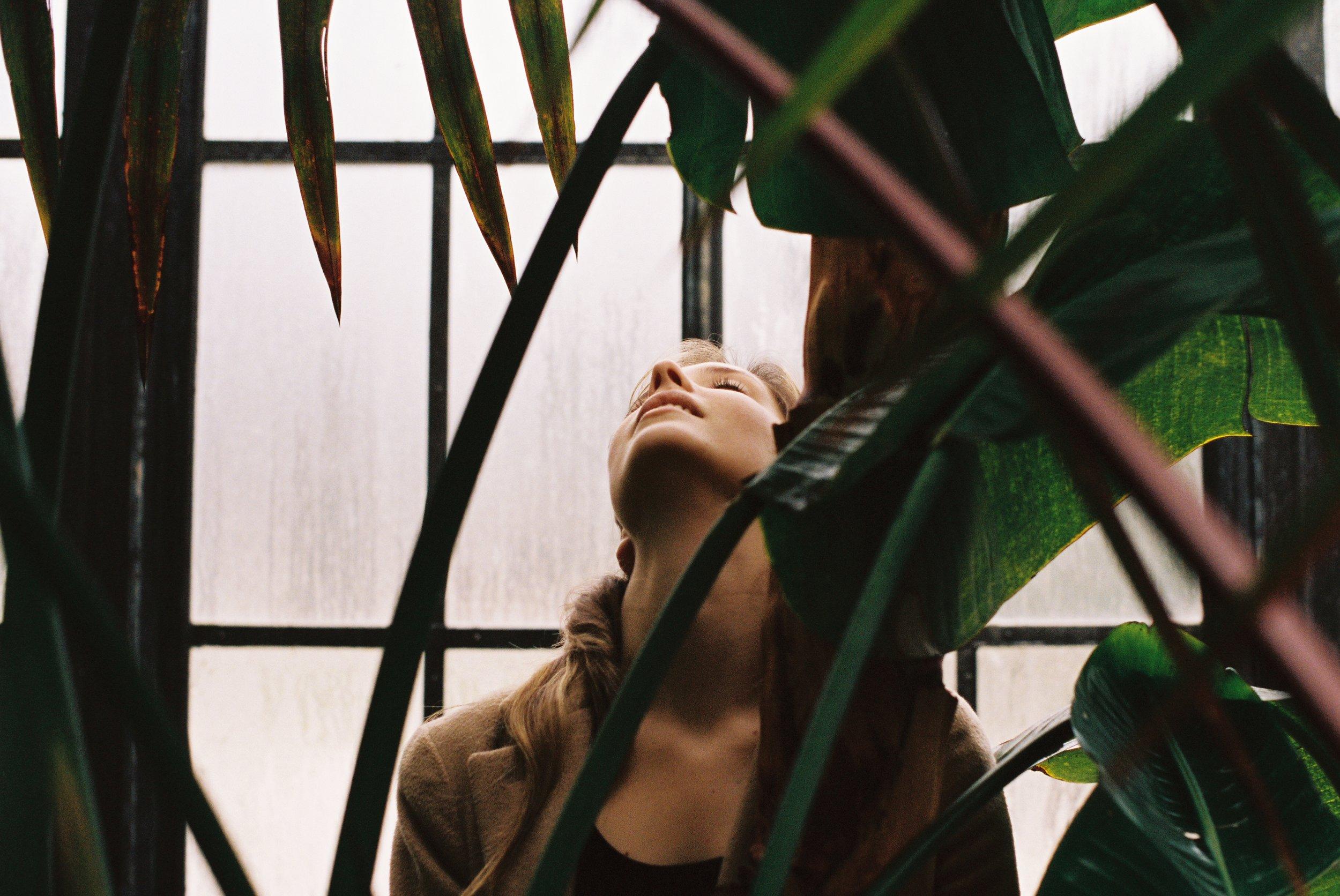 02 - The Light in the Leaves Pt. II.jpg