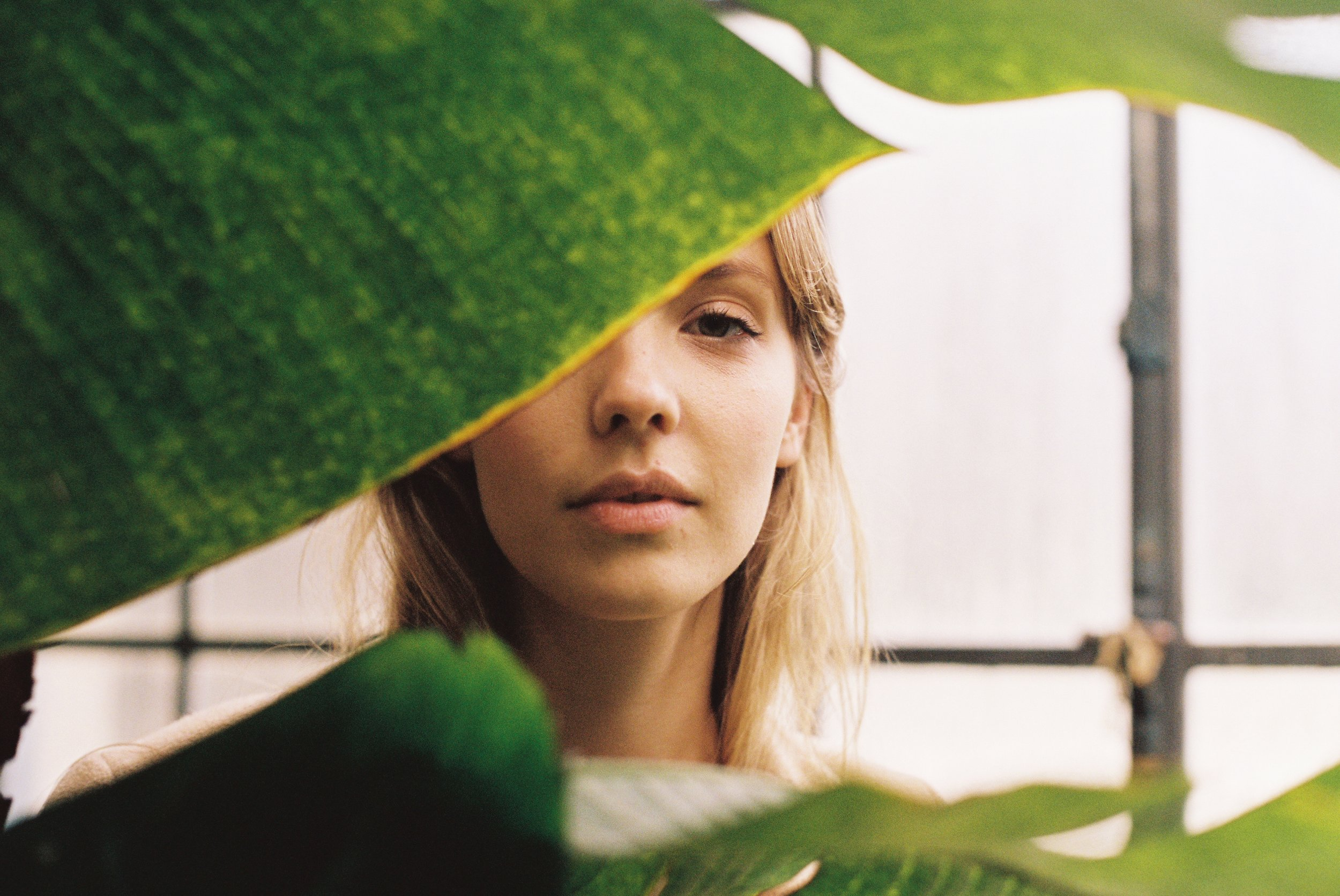 01 - The Light in the Leaves.jpg