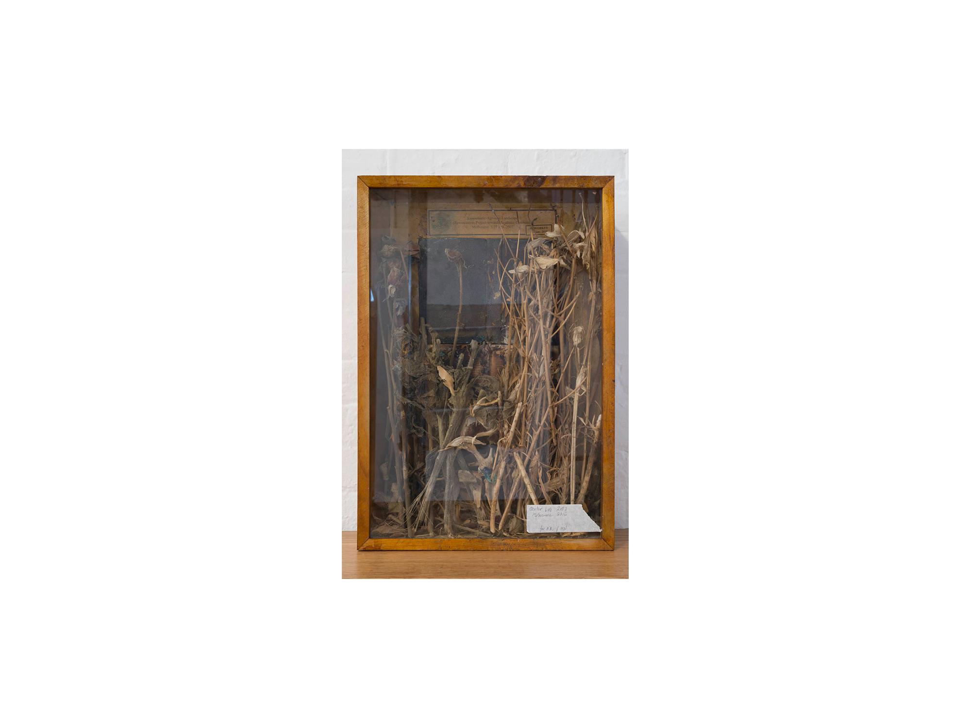 Bernhard Sachs   Iconoclastic-Agnostic Landscape , 2016 mixed media, dried flowers in vitrine 64 x 44 x10cm   ARTIST BIO
