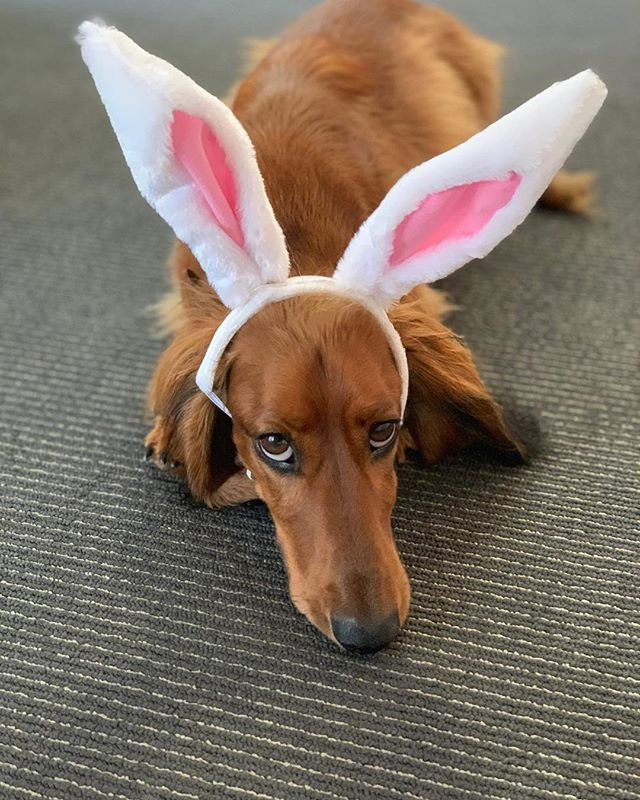 Someone's not wanting Easter to be over ... 🐰 @arthur.majer #backtoreality