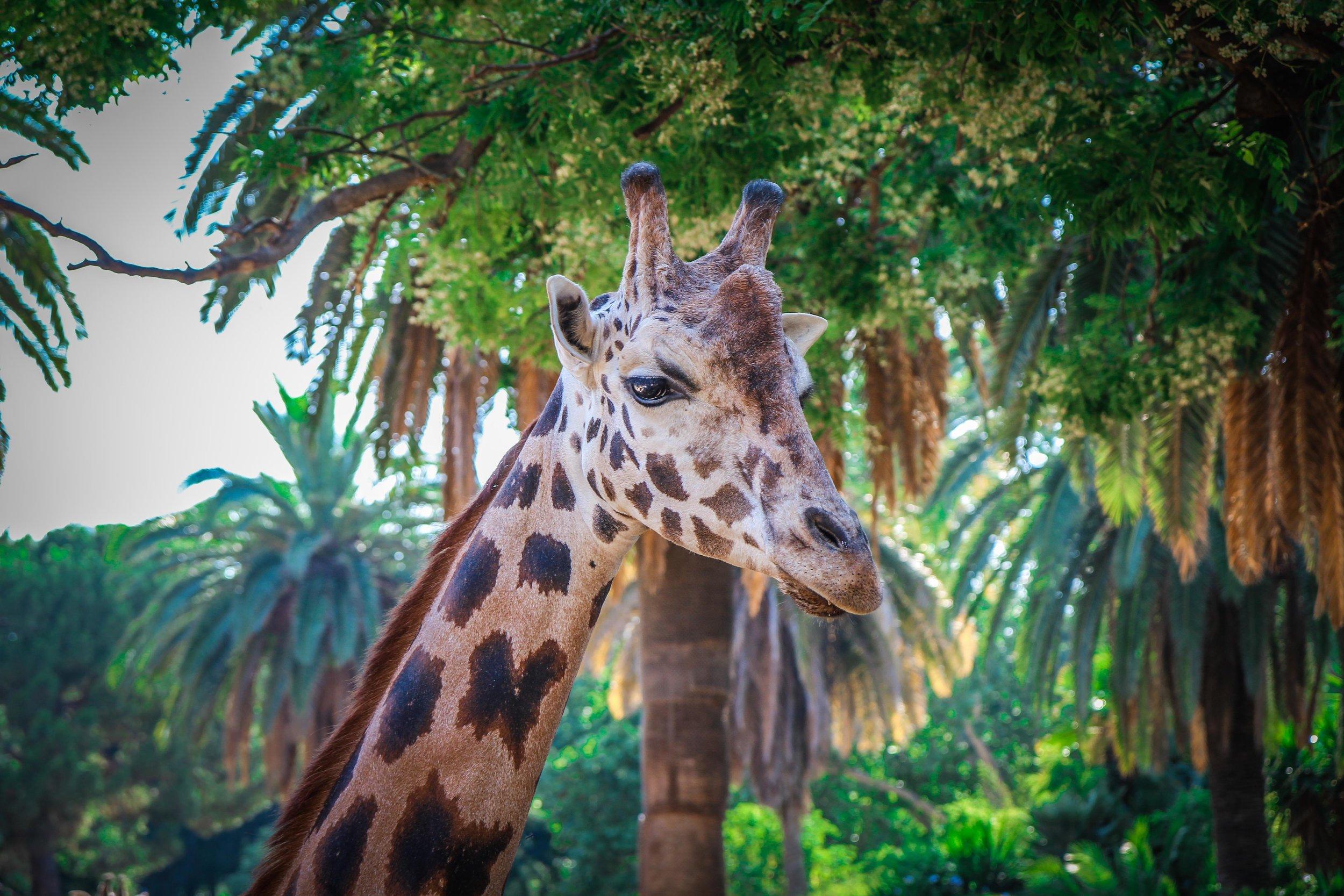 Parc Zoològic de Barcelona6.jpg