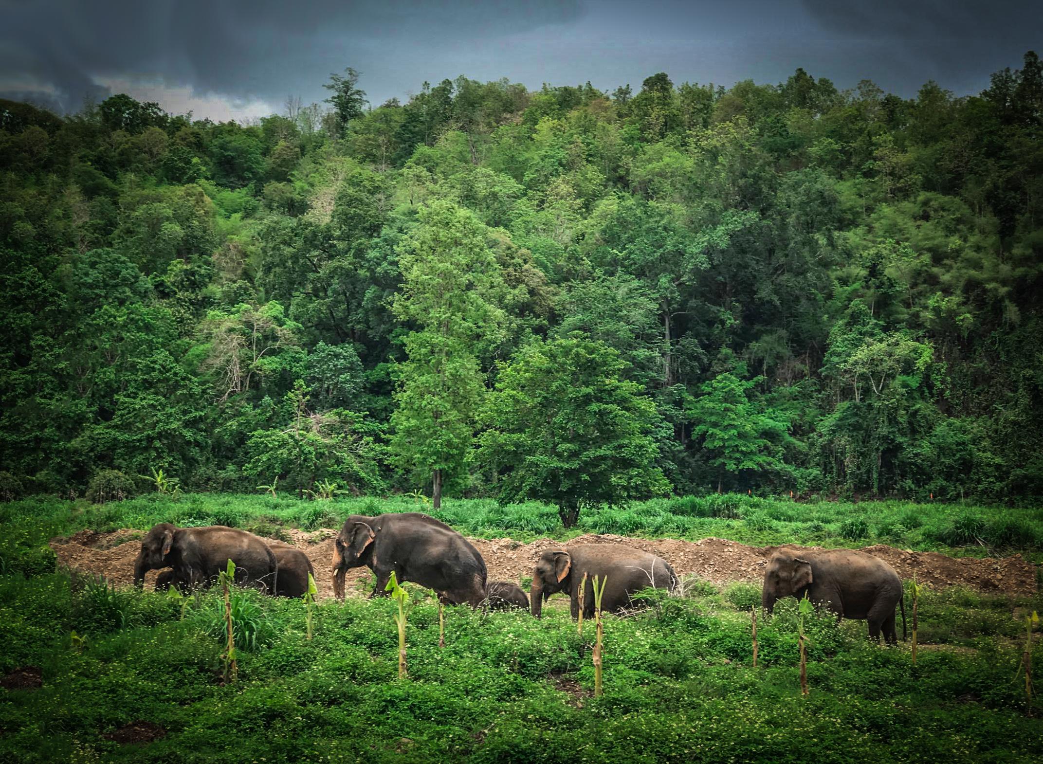 Thailand_Chiangmai_Reizen_met_kinderen_olifanten (1 van 1).jpg