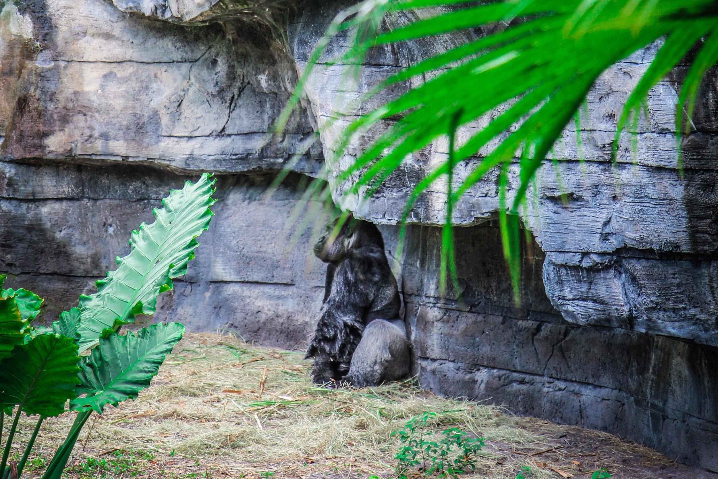 Animal_kingdom_orlando_reizen_met_kinderen-42.jpg