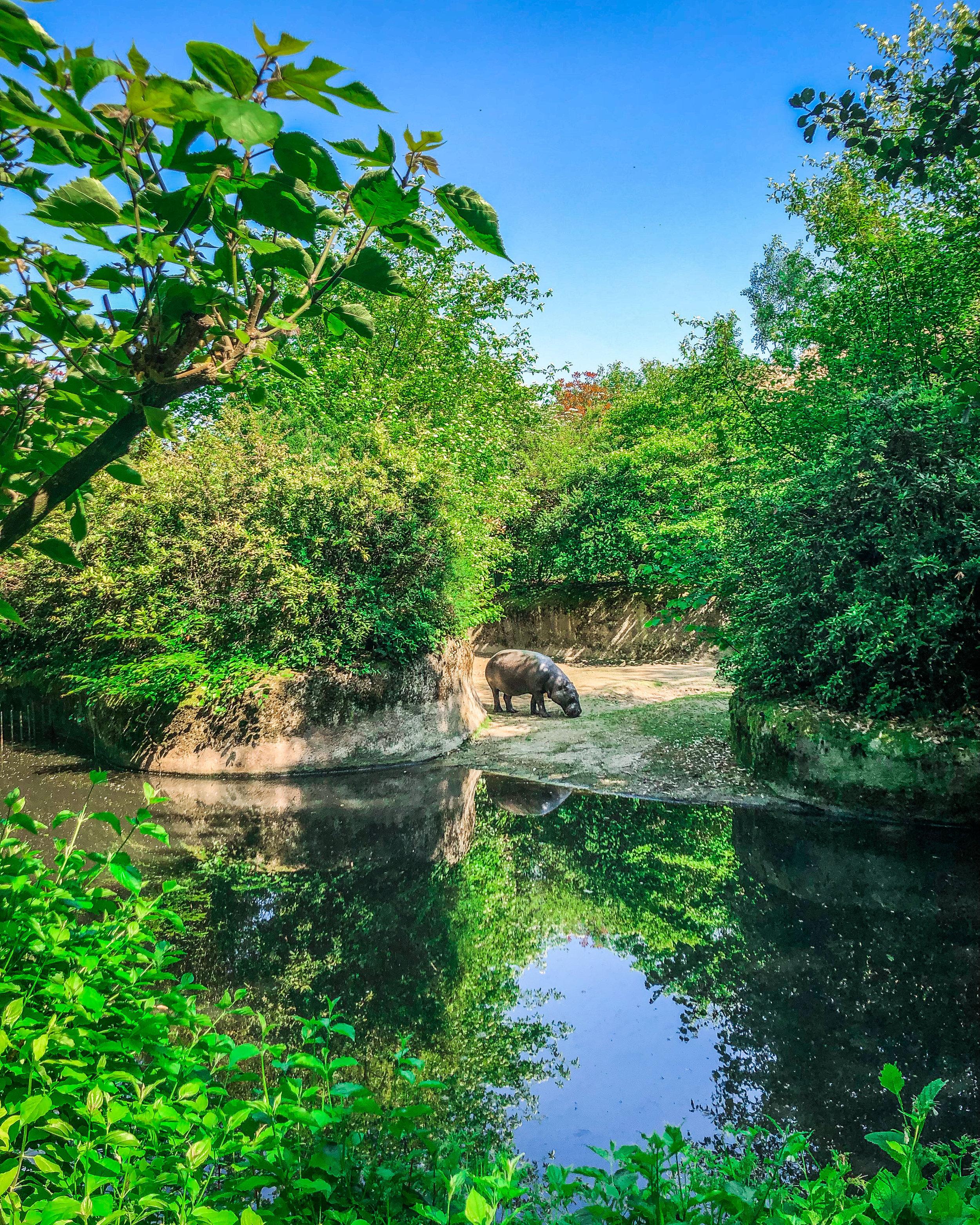 Limburglonkt - Kerkrade Gaiazoo - Mooie natuur - reizen met kinderen