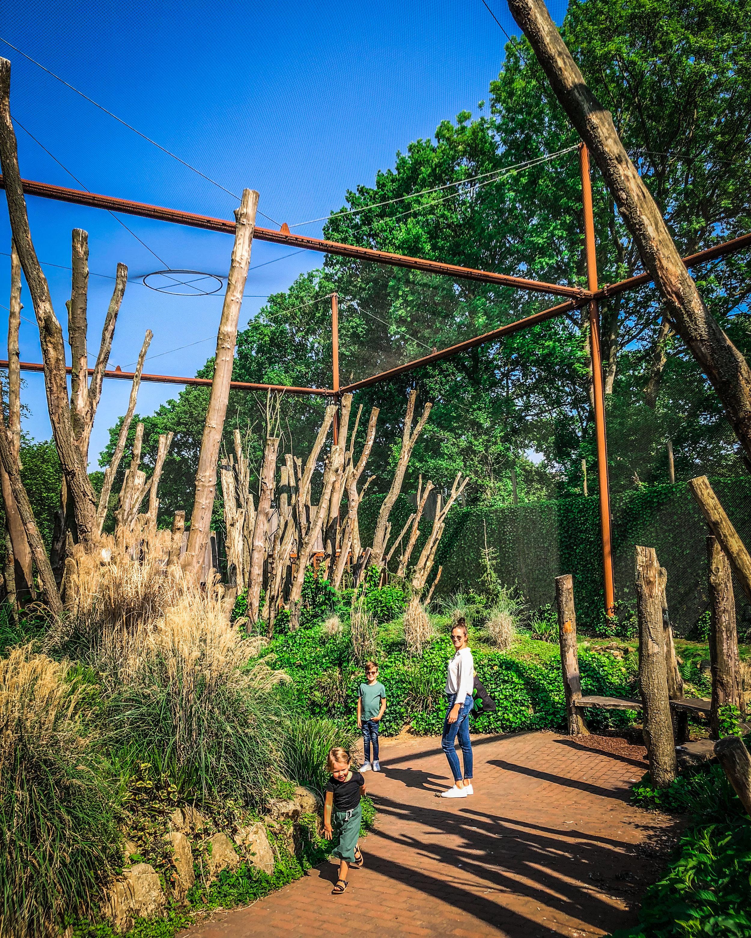 Limburglonkt - Kerkrade Gaiazoo - reizen met kinderen - wandelen tussen vogels