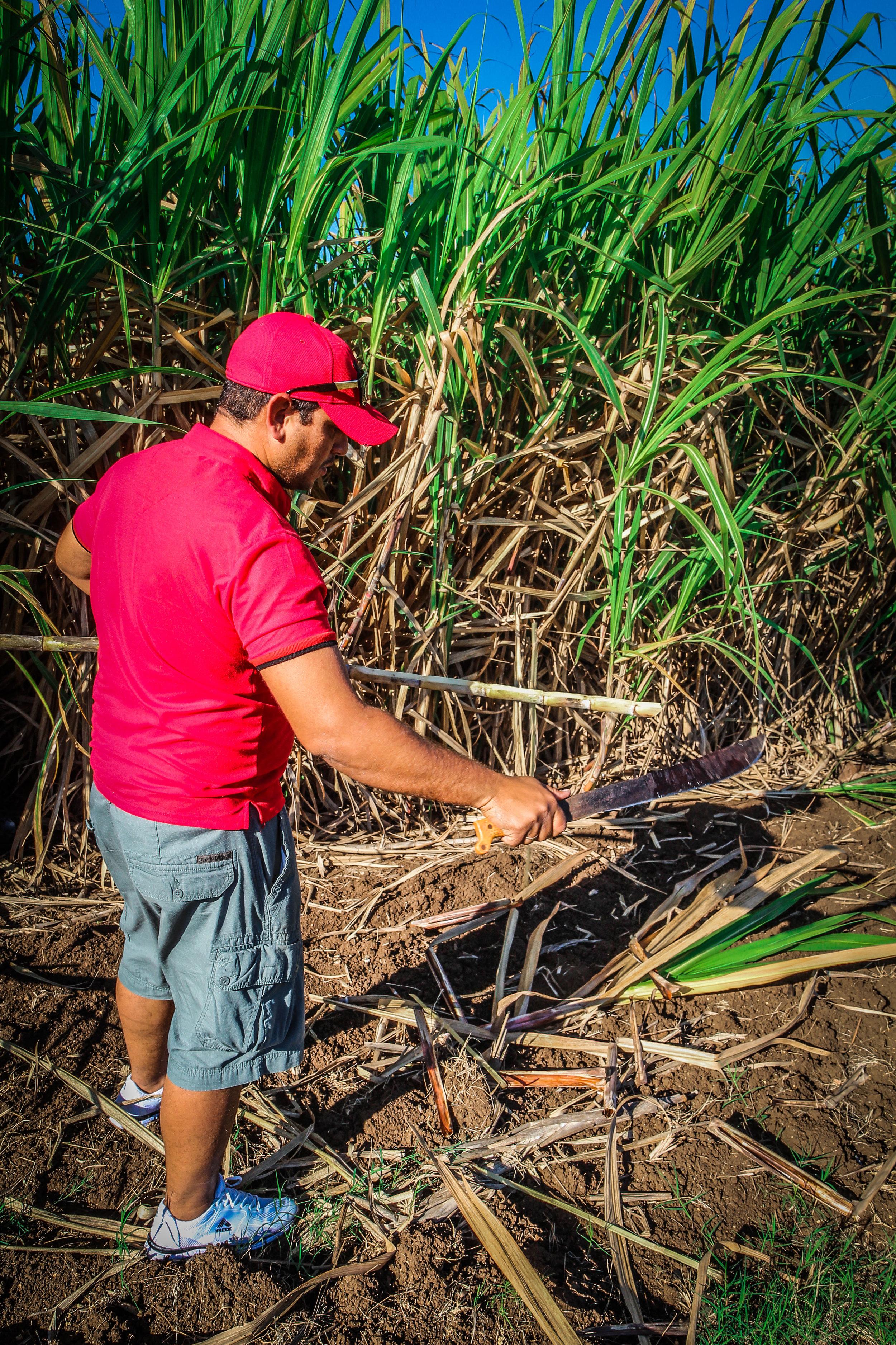 Vers suikerriet eten langs de weg -Onderweg naar Trinidad cuba