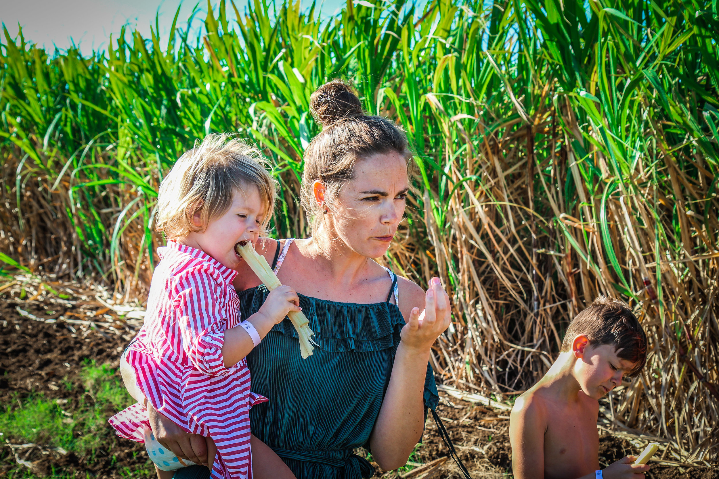Vers suikerriet eten langs de weg - cuba