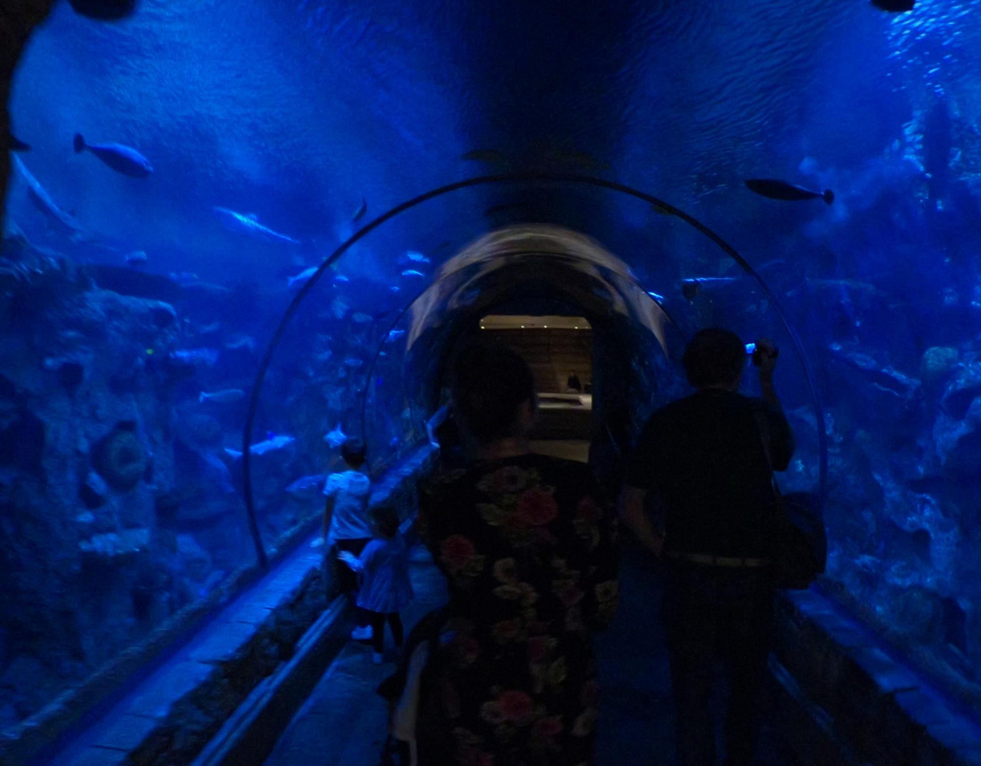 shark reef aquarium at mandalay bay_vegas met kinderen3.jpg