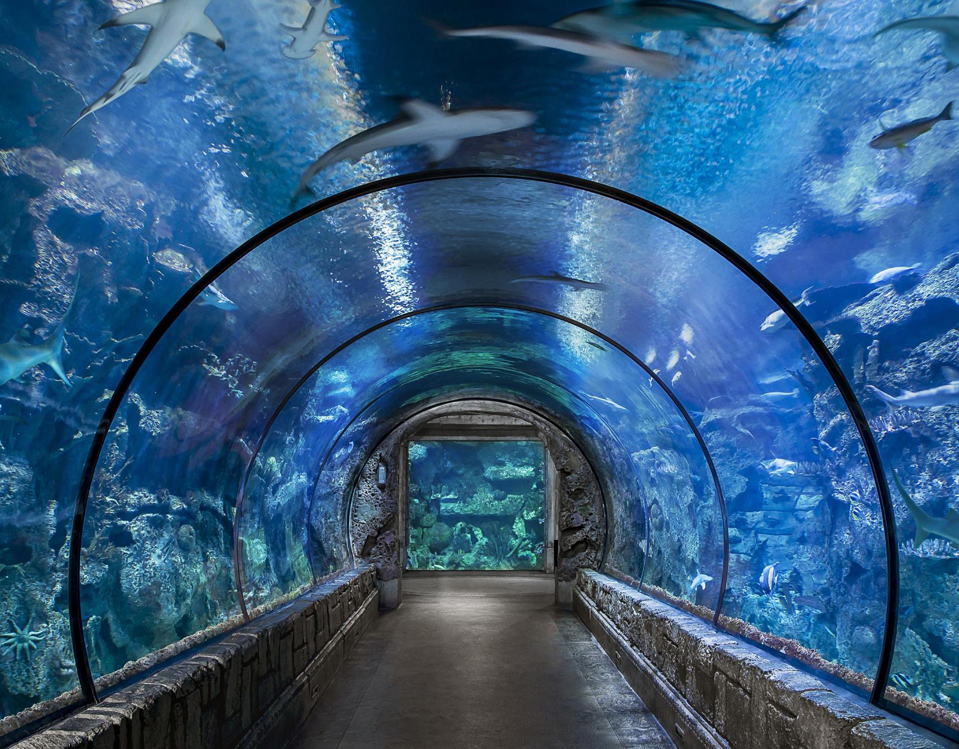 shark reef aquarium at mandalay bay_vegas met kinderen2.jpg