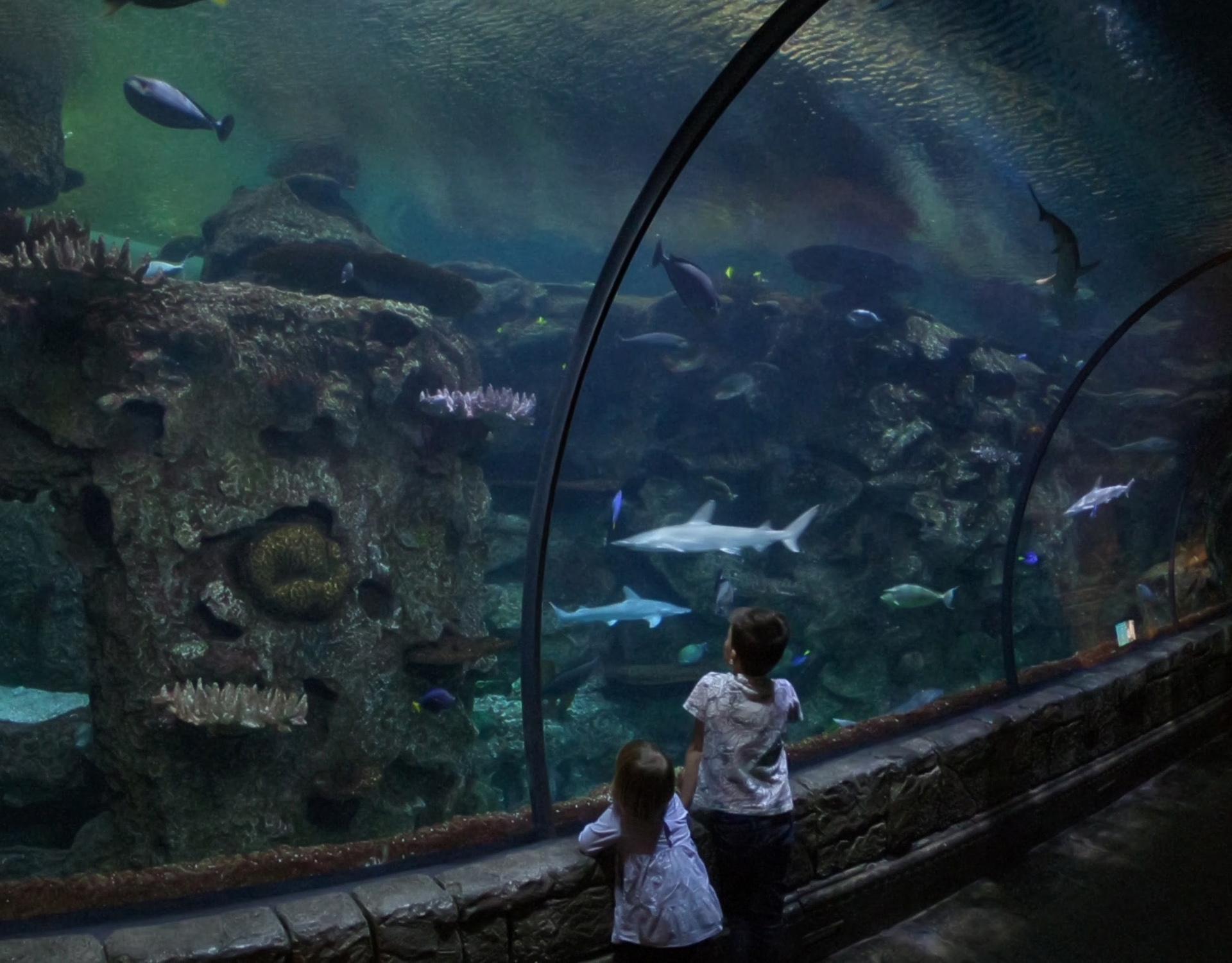 shark reef aquarium at mandalay bay_vegas met kinderen4.jpg