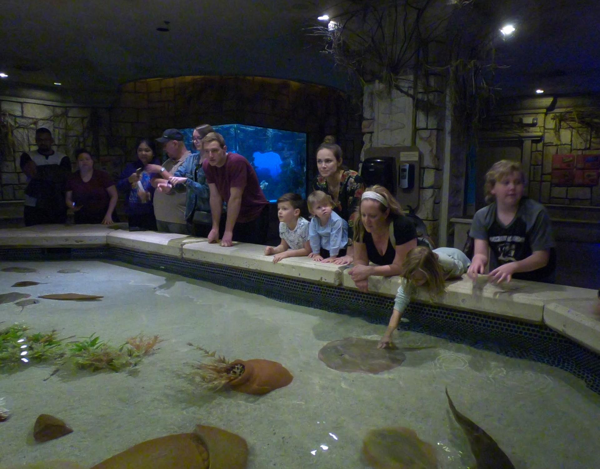 shark reef aquarium at mandalay bay_vegas met kinderen5.jpg