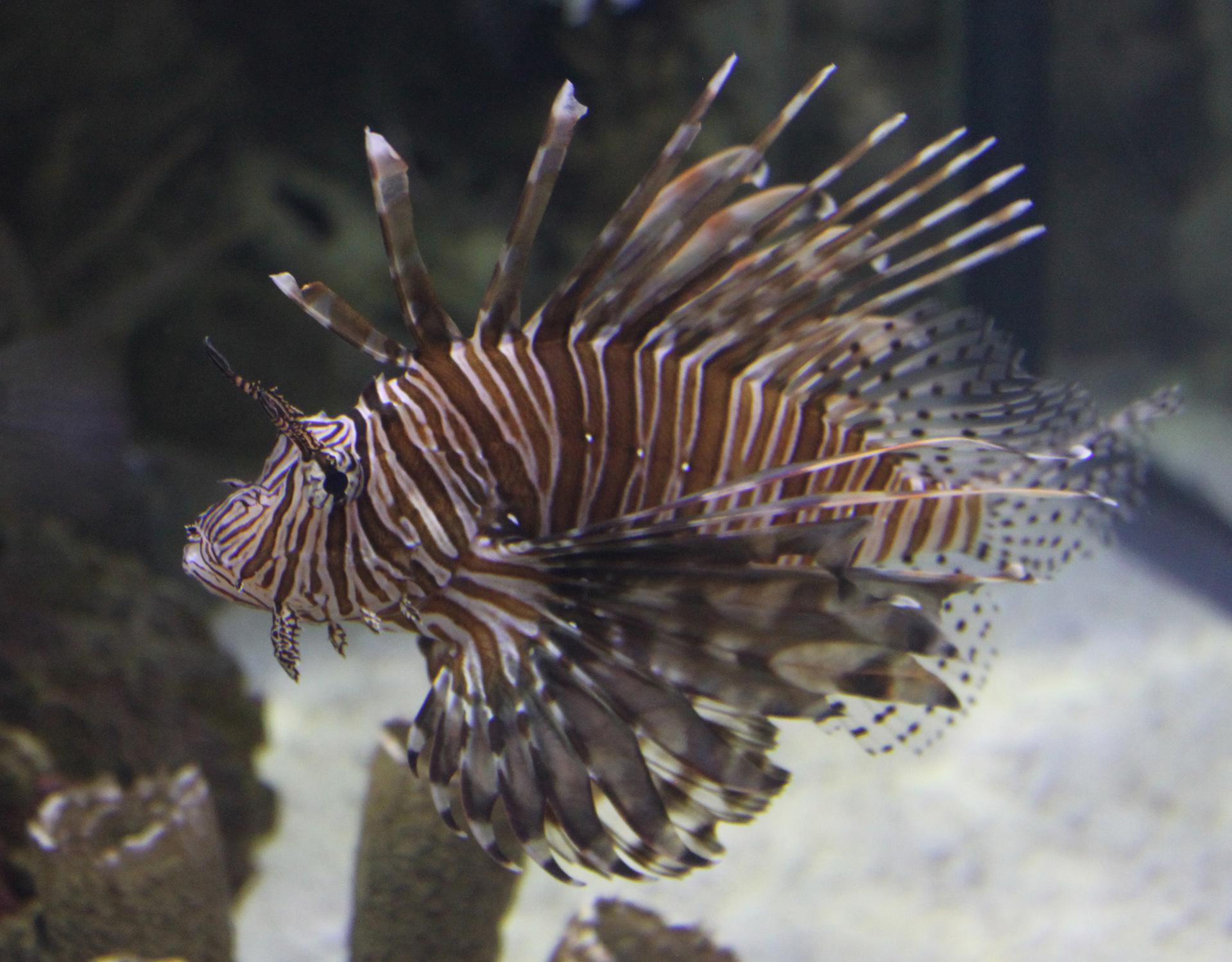 shark reef aquarium at mandalay bay_vegas met kinderen7.jpg