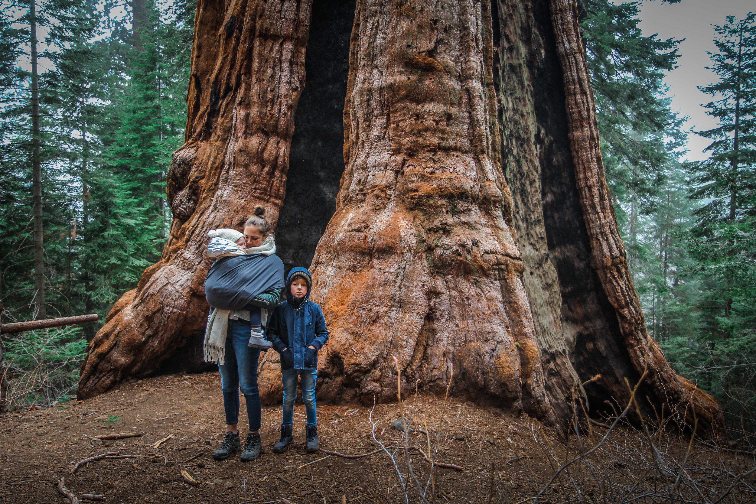 withkidsontheroad_WestKust_Sequoia-20.JPG