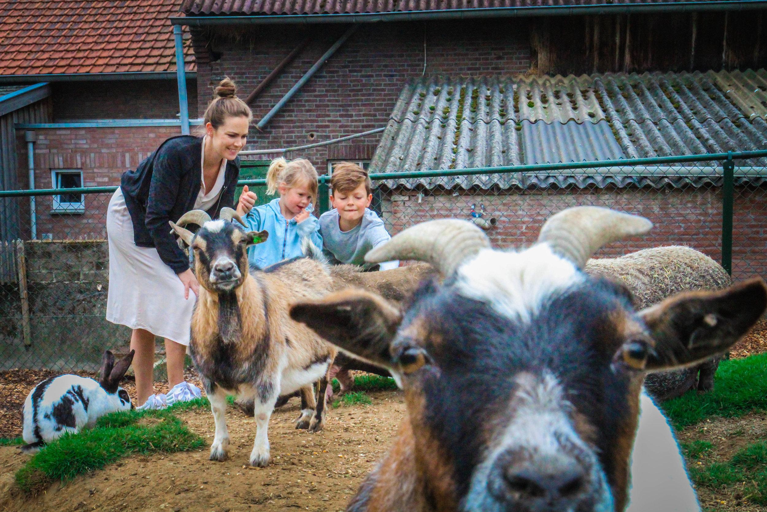 farmcamps de verloren kost-2.jpg