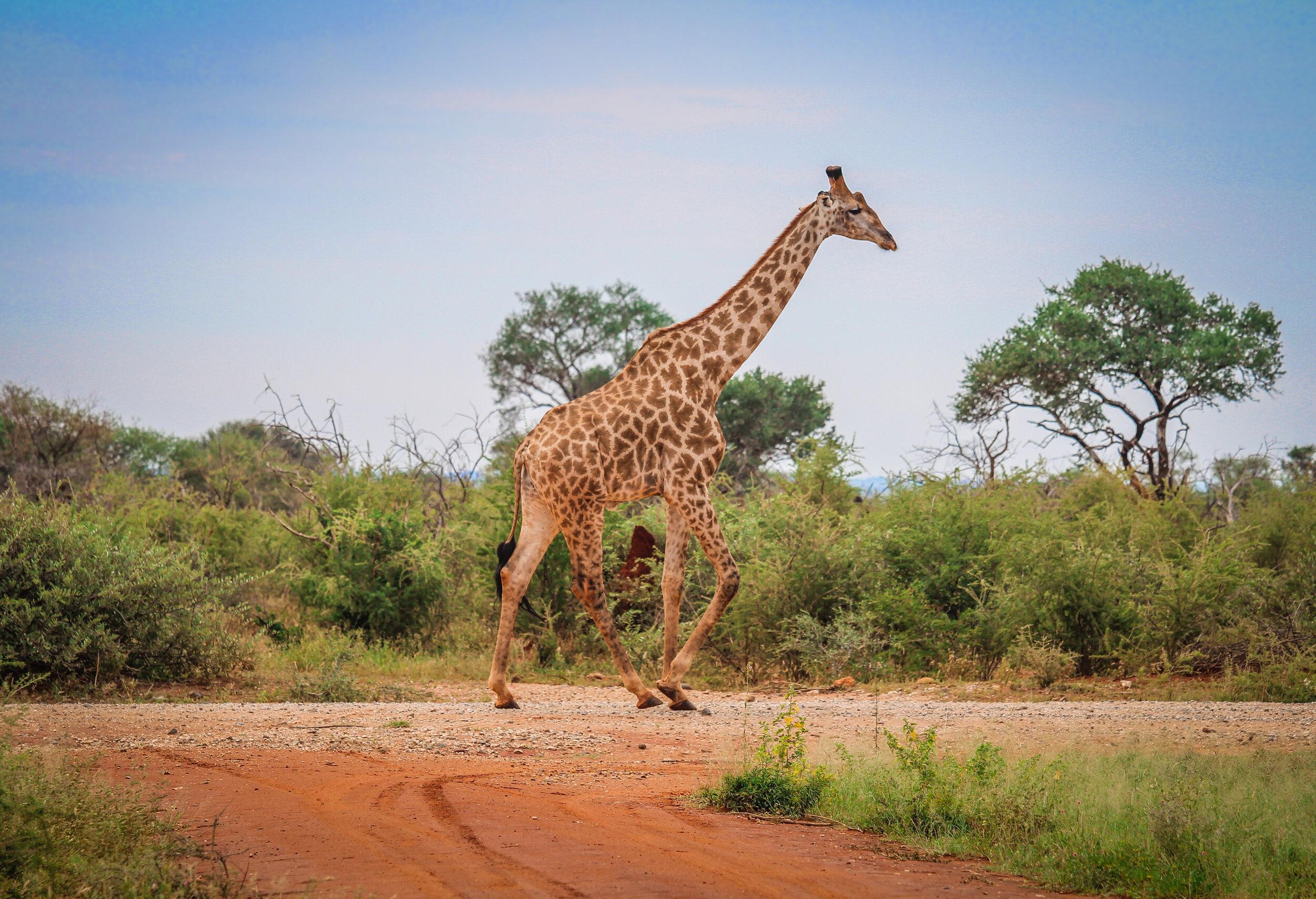 withkidsontheroad_Madikwe Game Reserve---14.JPG