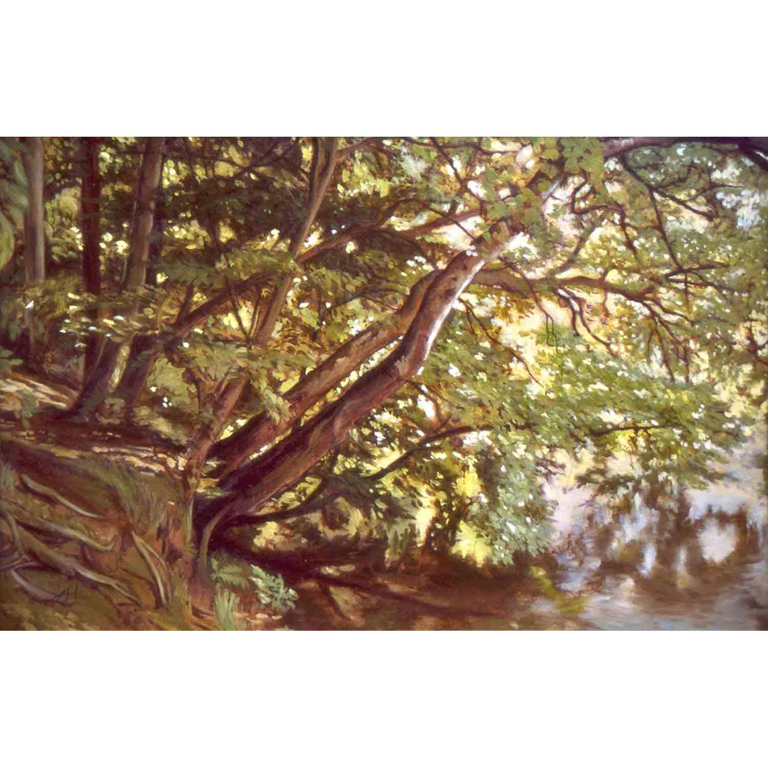 Overhanging Trees - oil on board