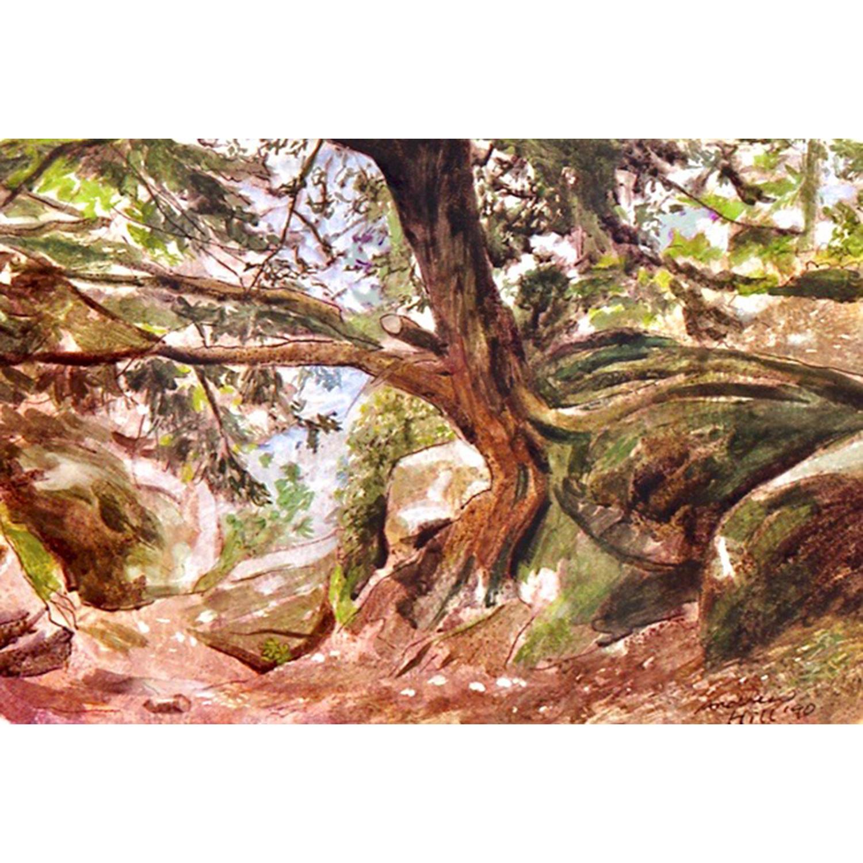 Overhanging Yew - mixed media