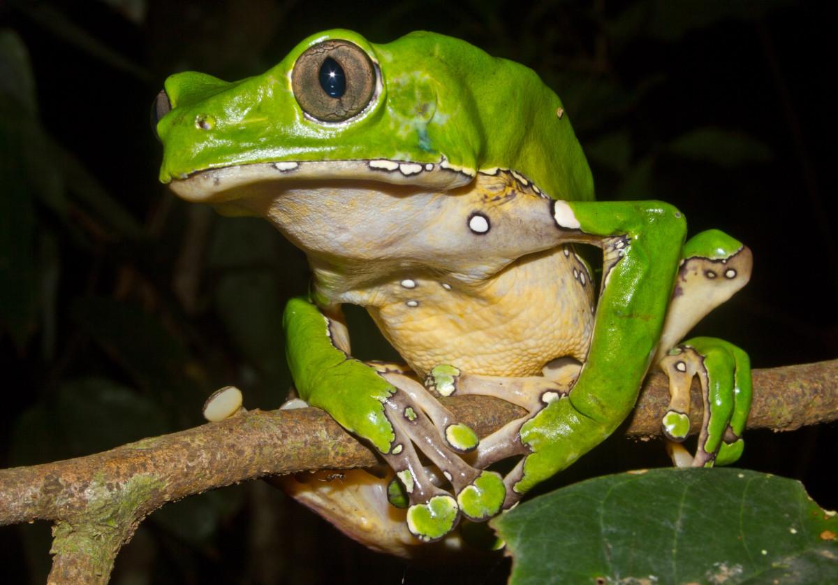 kambo-frog-medicine.jpg