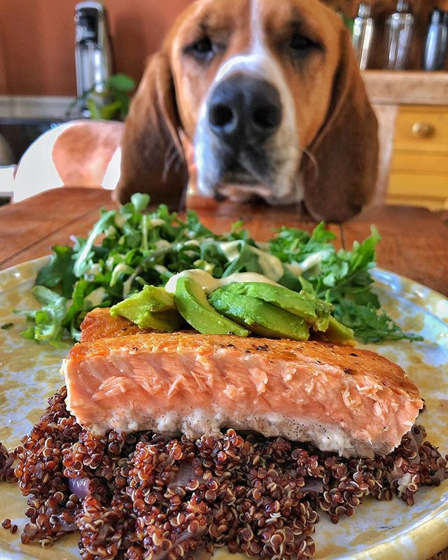 Long training days tend to suck, and I find the best way to recover and bounce back for the next long training day (tomorrow) is with a balanced meal. Keep it simple! Sautéed salmon (medium rare, skin extra crispy), avocado, quinoa (red onion and garlic) and salad. @foster_coonhound approved. • • • • #🐶 • • • • #ironmantraining #triathlontraining #ironmantri #triathlon #triathlonfood #dogsofinstagram #coonhoundsofinstagram #coonhoundsofnyc #foodstagram #delicious #igfood #instafood #buzzfeast #buzzfeedfood #foodgasm #foodforthought #tasty #foodphotography #forkyeah #thrillist #eater #instafood #instagram #dailyfoodfeed #foodbeast #yummy