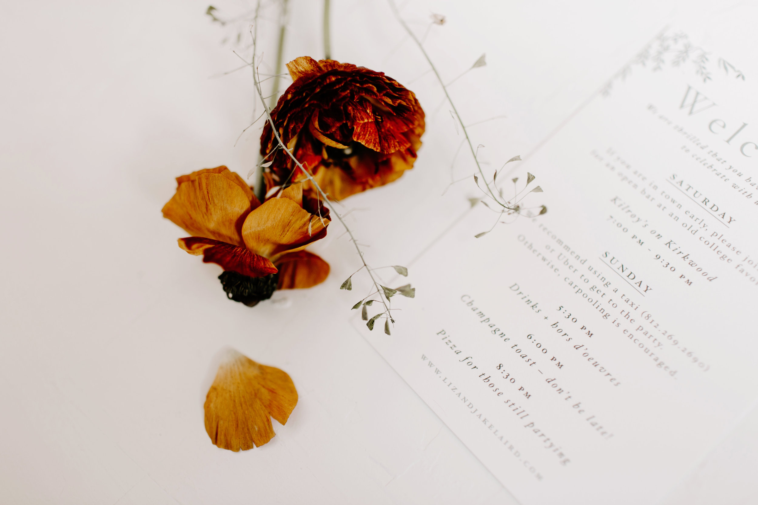 Liz and Jacob surprise wedding Bloomington Indiana Emily Elyse Wehner Photography LLC-12.jpg