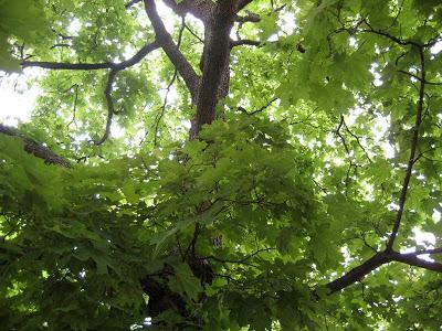 puidenalla-1.jpg
