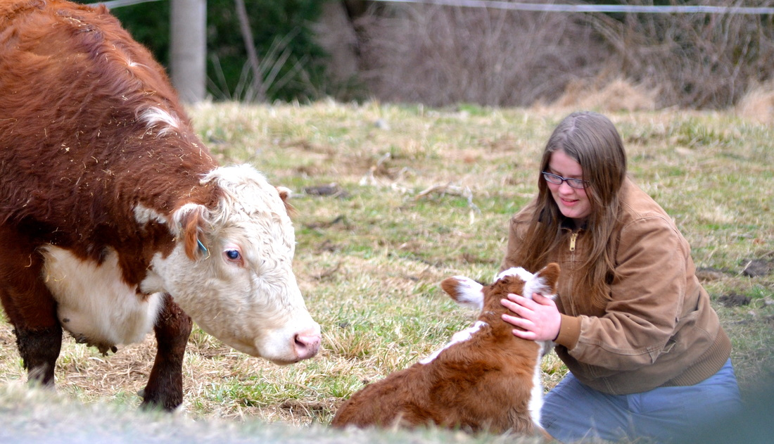 Emily with a new calf