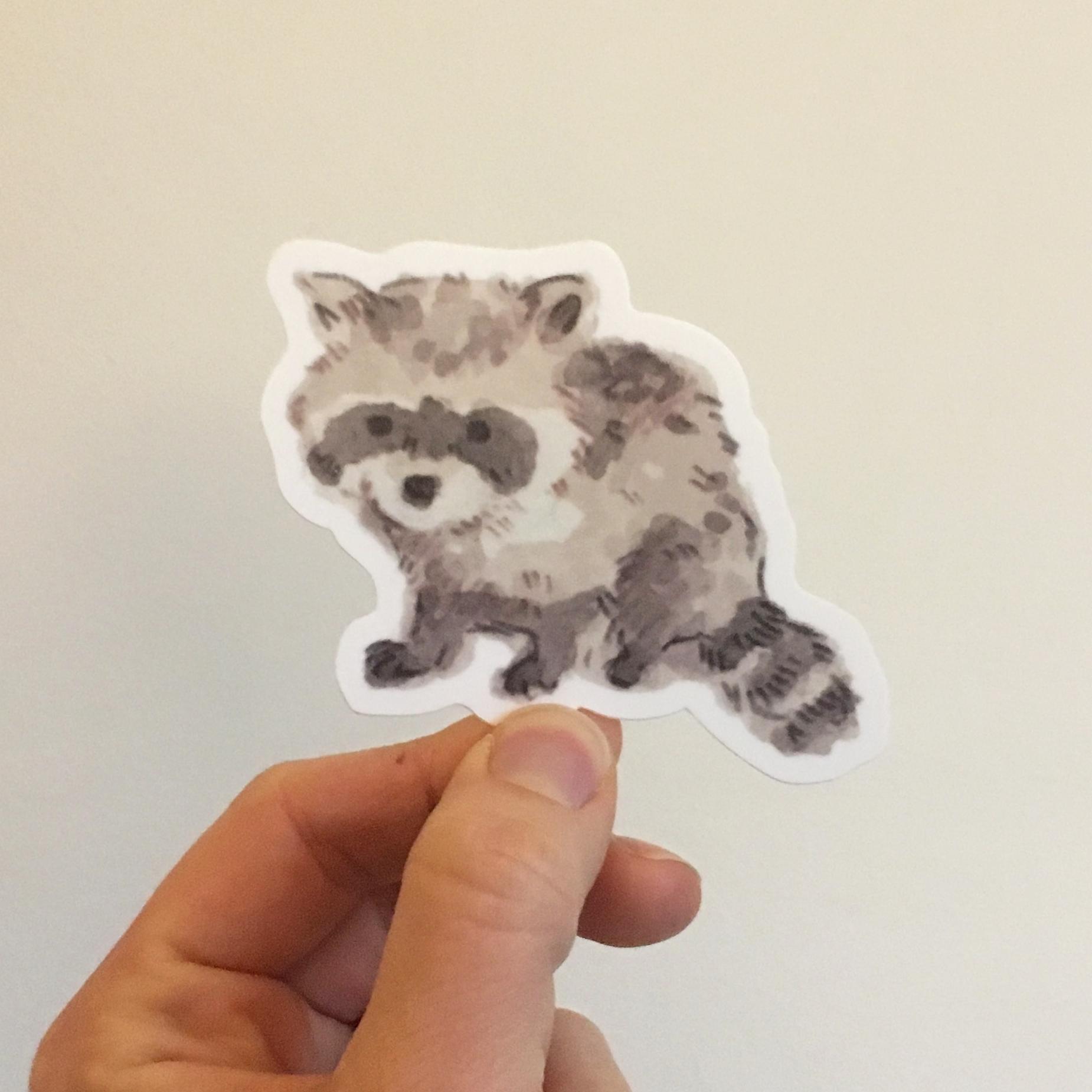 baby raccoon copy.jpg