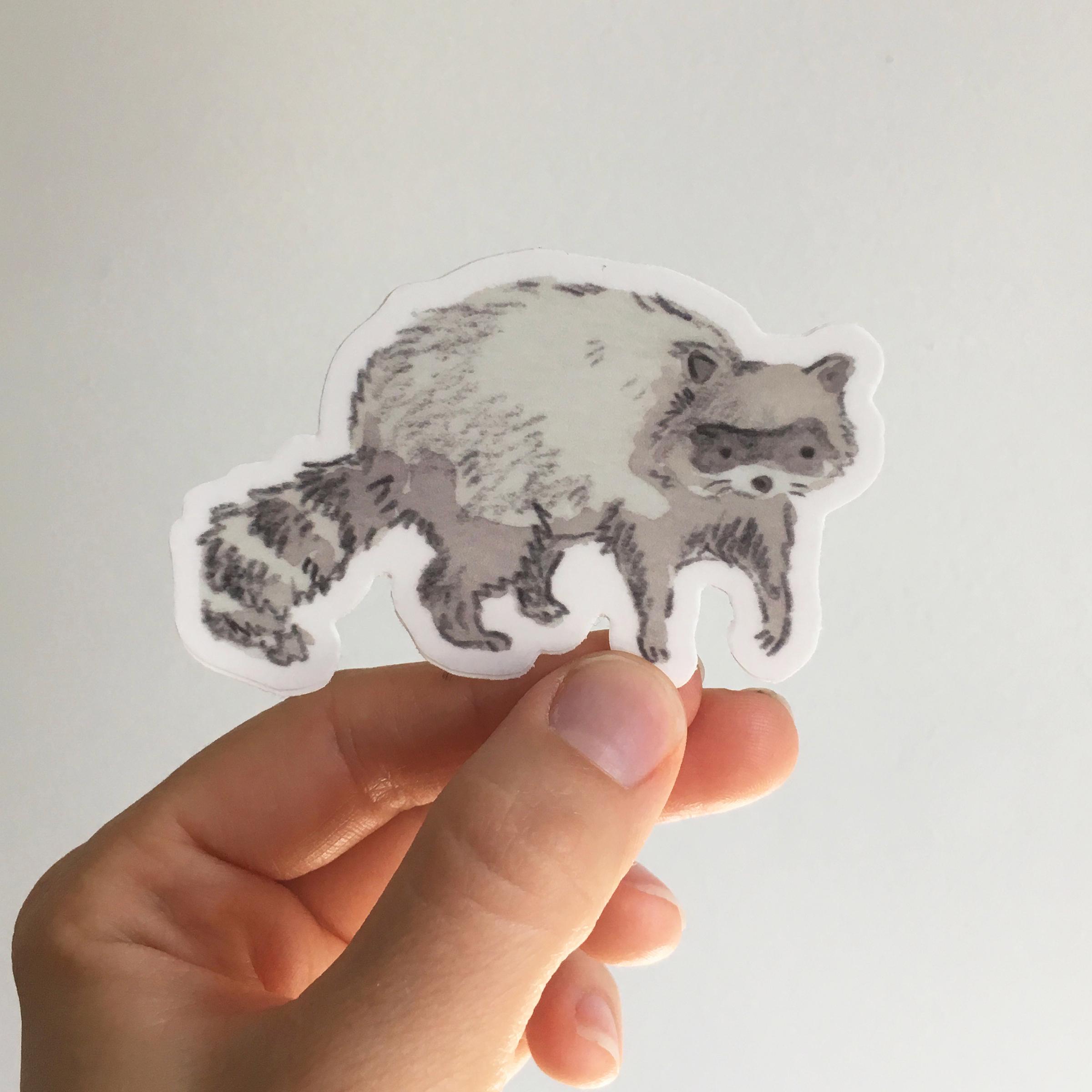 Raccoon sticker square copy.jpg