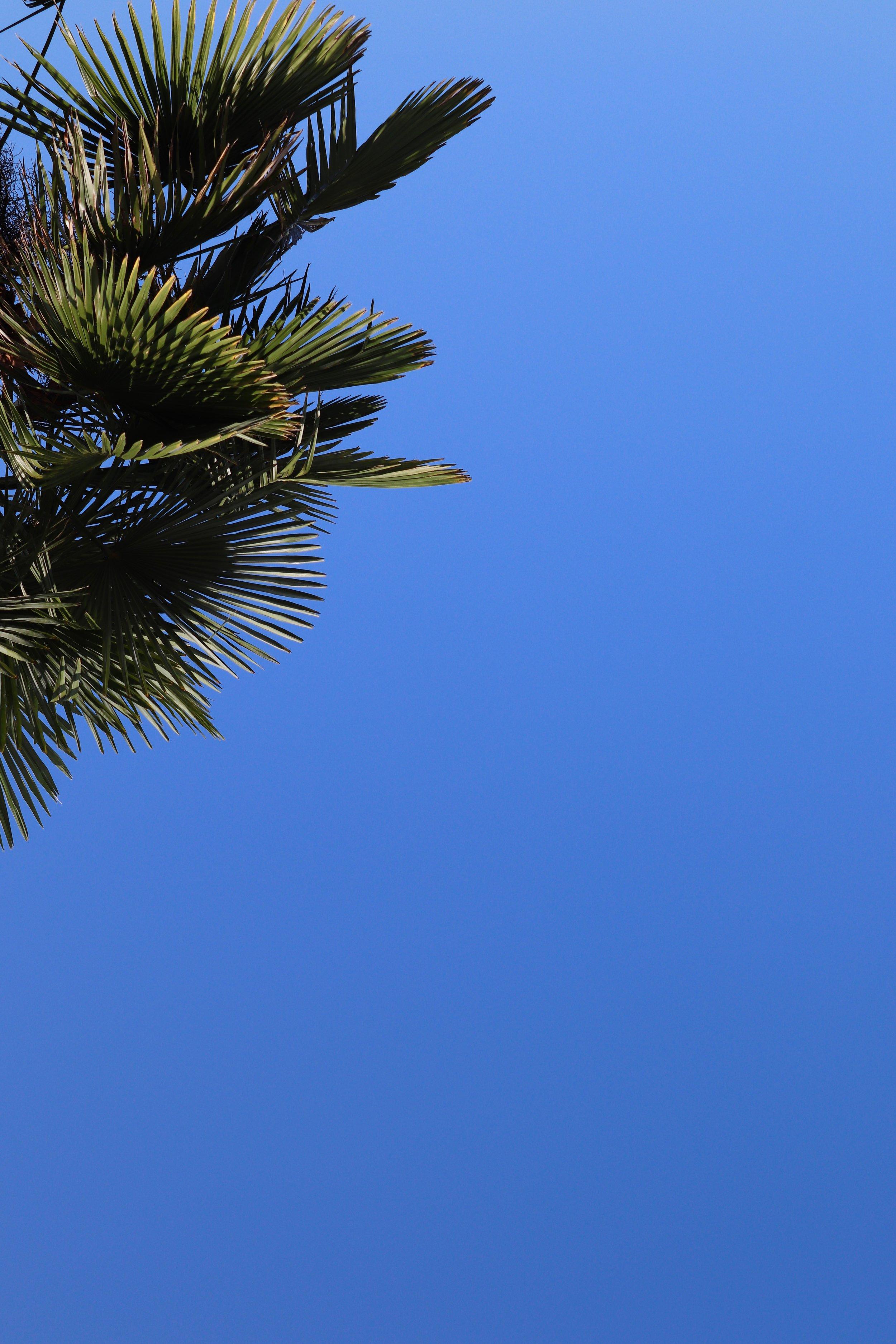 Palm Trees & Sky.jpg