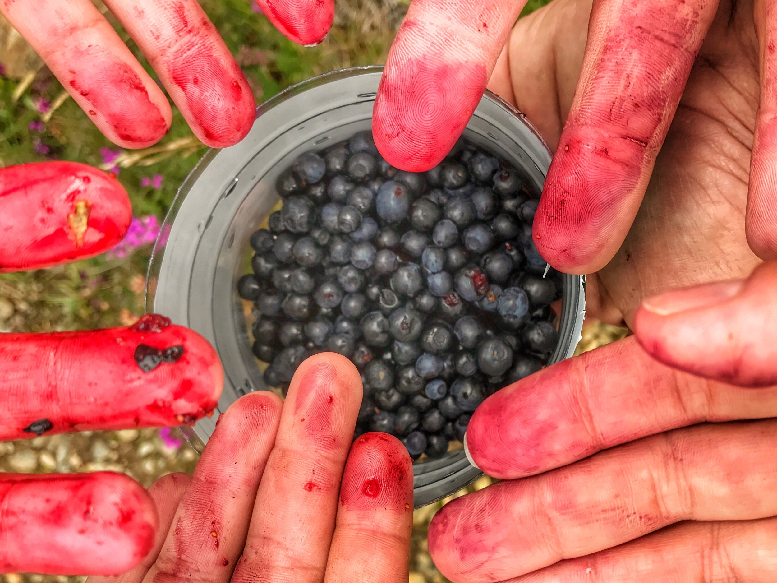 Foraging Fingers